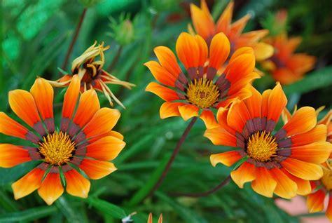 imagenes flores hermosas 3d rosas con brillo flores hermosas lindas hermosas