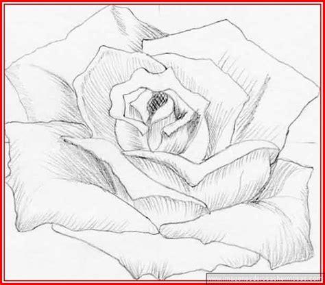 dibujos realistas a lapiz de flores imagenes de flores para dibujar a lapiz faciles imagenes