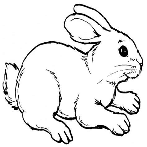dibujos para colorear de conejitos bebes galer繝箝a de im繝筍genes dibujos de conejos para colorear