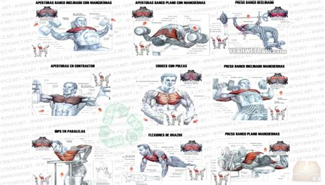 chest workout fitness exercises arms