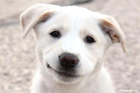puppy smiling file smiling jpg wikimedia commons