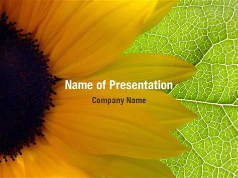 sunflower powerpoint templates sunflower powerpoint