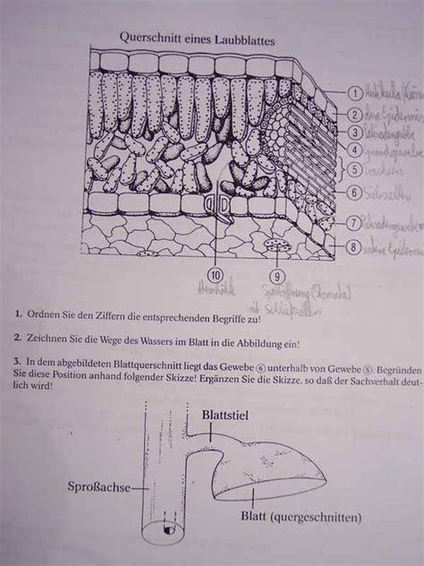 Beschriftung Querschnitt Laubblatt by Bei Mir Gehts Auch Ums Laubblatt F 252 R Euch Sicherlich Kein Pr