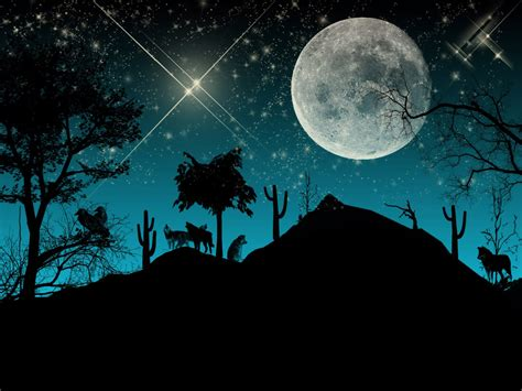 imagenes de jardines nocturnos banco de imagenes y fotos gratis paisajes naturales