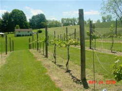 building a substantial grape support system dave s garden