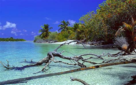 nature landscape deserted island beach trees dead