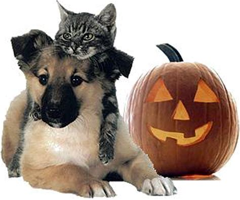 how much pumpkin to give a puppy safety tips for dogs and cats road paws