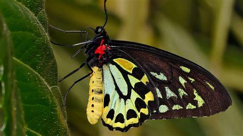 black wallpaper with yellow butterflies butterflies high resolutions wallpapers