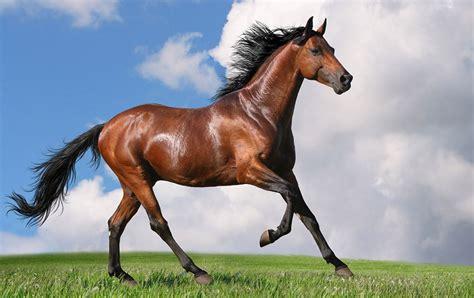 alimentazione cavallo la giusta alimentazione cavallo sportivo nell