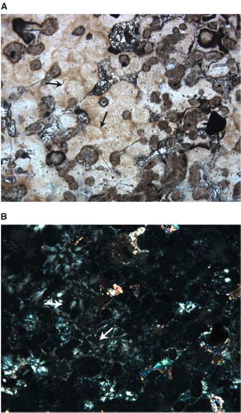 hibole in thin section figure f14 spherulitic texture can be observed in some