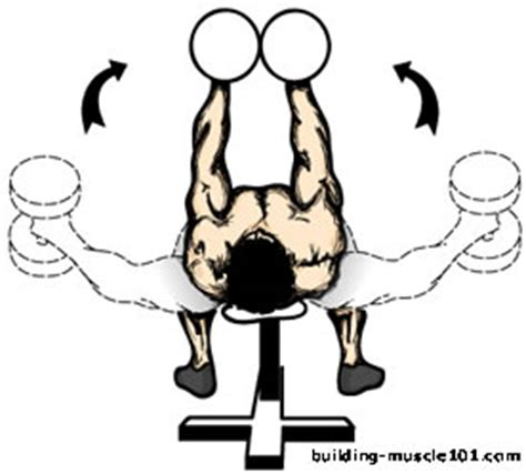 bench fly flat bench dumbbell flyes