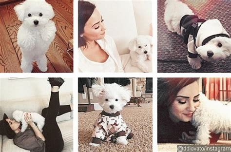 demi lovatos dogs tragic death new details about what demi lovatos dogs tragic death new details about what demi
