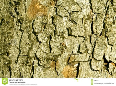 color tree bark texture stock photo image 89442377