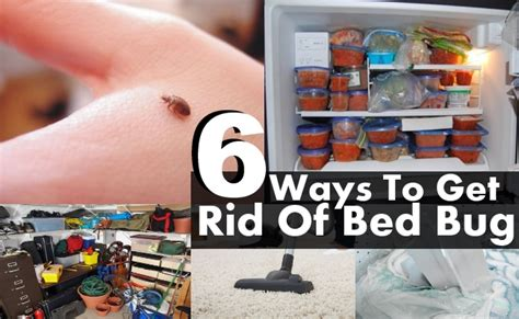 rid  bed bugs fast  rid  fruit flies white vinegar tick sprays  humans