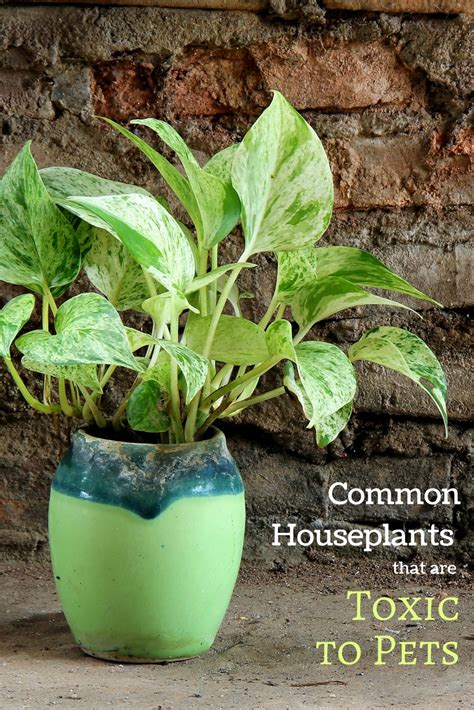 common house plants poisonous to pets safe gardening with dogs and cats 12 common garden plants poisonous to pets garden therapy