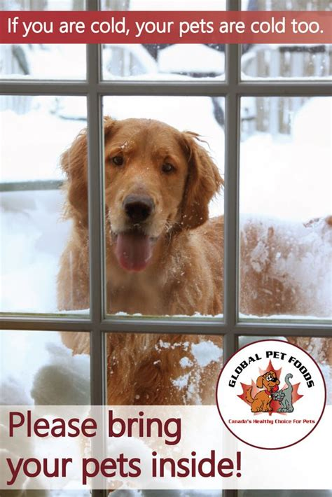 what temperature is cold for dogs the winter keep in mind and periods on