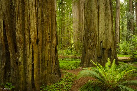 Redwood Lighting by Photographing Redwoods Kit