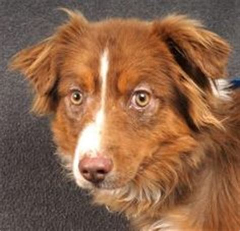 puppies for adoption colorado springs save me adopt mountain west dogs on colorado springs adoption and