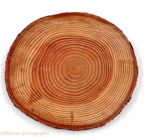tree ring the of growth rings 229 rringe douglas