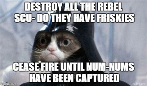 Star Wars Cat Meme - star wars grumpy cat