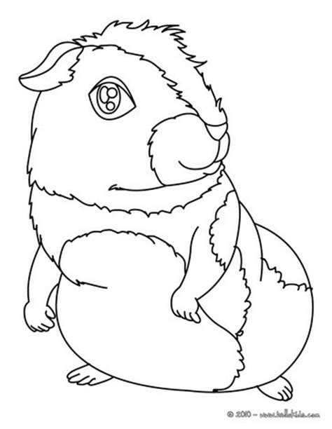 coloring page guinea pig guinea pig printable coloring pages