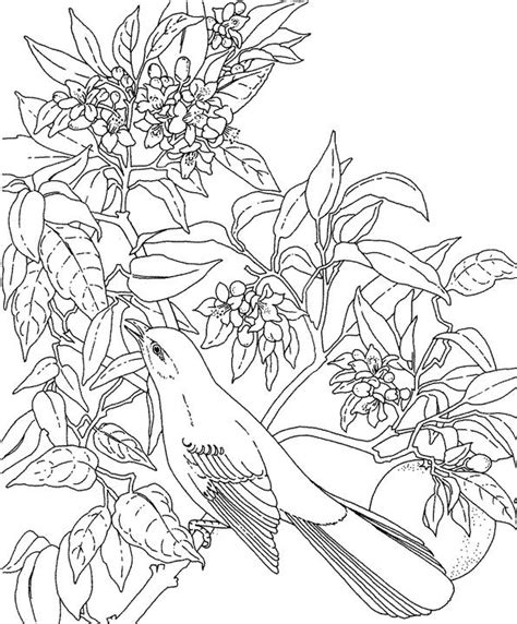 florida mockingbird coloring page purple kitty