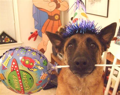 happy birthday puppy images my friend forum happy birthday dale
