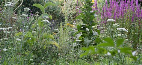 katzen und pflanzen 4771 naturgarten aktuell pflanzen und tiere