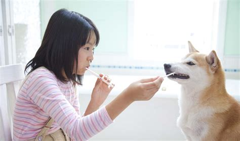 brushing puppy teeth teeth cleaning 101 brushing dogs teeth top tips