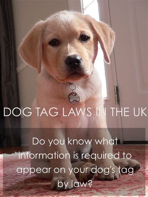 selling puppies laws tags engraving and the in the uk