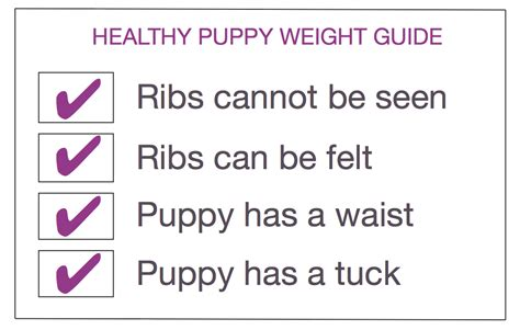 puppy development by week puppy development stages with growth charts and week by week guide the happy puppy site