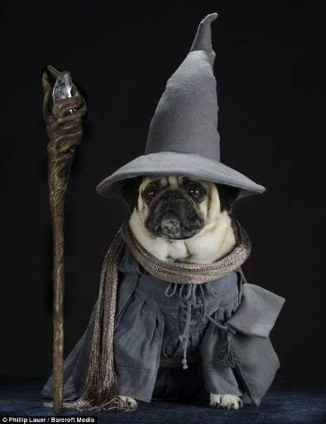 lord pug owner dresses his pet pugs in hilarious costumes from tolkien s lord of the rings