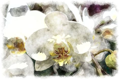 white orchid painting www pixshark images galleries with a bite