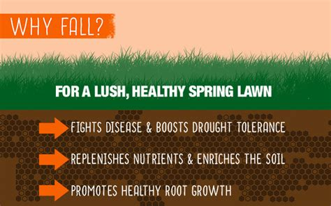 fall lawn fertilizer tips  home depot