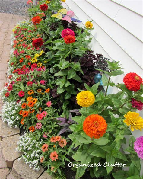 Yard Of Flowers Garden Tour 2013 Organized Clutter Zinnias Flower Garden