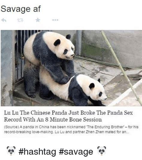 Sex Panda Meme - panda love meme www pixshark com images galleries with