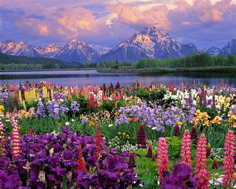 spring landscaping spring mountain landscape hd desktop wallpaper