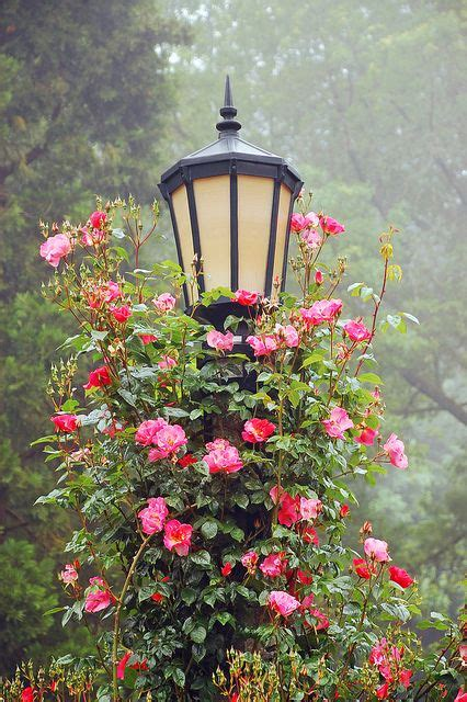 Flower Garden Photography 19 Flower Pictures Creative Home Garden Photography Ideas Holicoffee