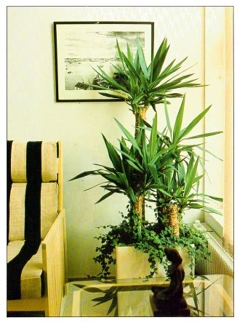 best tall indoor plants large and tall indoor plants