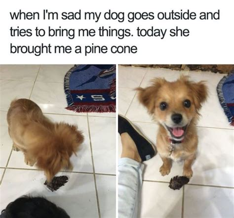 happy puppy meme best 25 happy meme ideas on laughing meme smiling meme and
