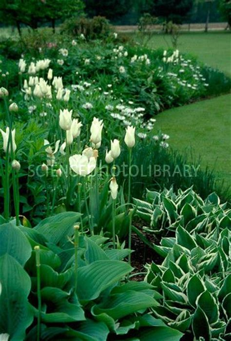 Green Garden Flowers Green White Perennial Flower Border Garden Tulips Hosta Flowers Gardens Containers