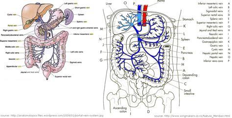 vene della testa vena porta ipertensione portale