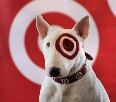target puppy target announces zellers canada stores that will be converted canadian