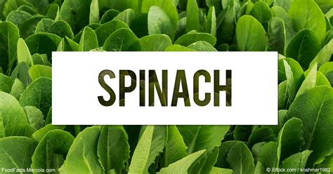 Body Of Water by What Is Spinach Good For Mercola Com