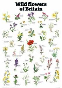 Guardian Home Exteriors - scottish wild flowers dragonwyck exteriors pinterest wild flowers wildflowers and tattoo