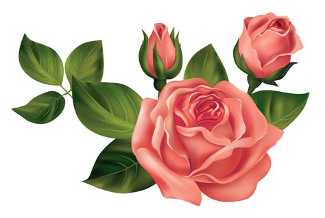 Bonia Bunga Silver transparent roses png clipart picture gallery