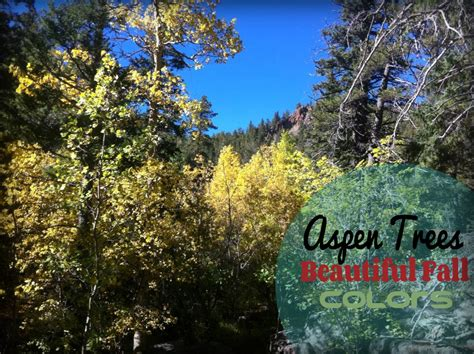 most scenic places in colorado colorado s most scenic drives to see fall colors