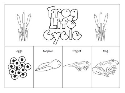 frog coloring worksheet frog cycle worksheet for kindergarten search classroom ideas frog