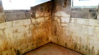 how to clean mold from basement why is not the answer for mold remediation all
