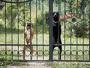 best dog to guard house top 10 dog breeds for protection wpsecurity